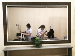 Зоосалон в Йошкар-Оле «Пушистый модник»